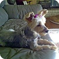 Adopt A Pet :: Jazzie - Columbus, OH