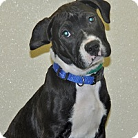 Adopt A Pet :: Que - Port Washington, NY