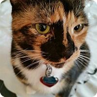 Adopt A Pet :: Sally Spooks - Richboro, PA