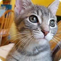 Adopt A Pet :: Breezy - Edmond, OK