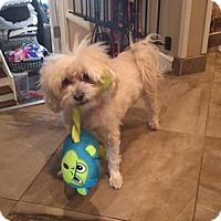 Adopt A Pet :: Lucky#5 - N. Babylon, NY