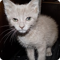 Adopt A Pet :: Oleander - South Bend, IN