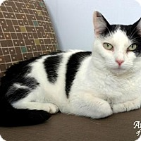 Adopt A Pet :: Piper - Roanoke, VA