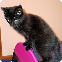 Adopt A Pet :: Puma - Fort Wayne, IN