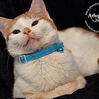 Adopt A Pet :: Timmy - Ft. Lauderdale, FL
