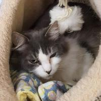 Adopt A Pet :: Lucy Inthesky - Erie, PA