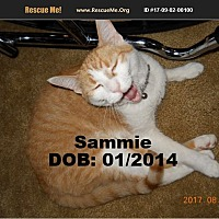 Adopt A Pet :: Sammie - Chandler, AZ