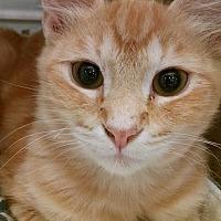 Adopt A Pet :: Annie - Morganton, NC