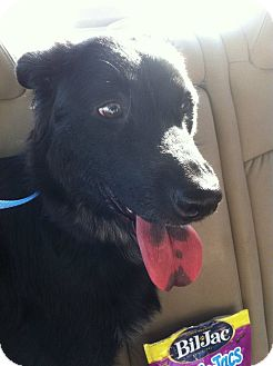 Border Collie Mix Dog for adoption in Stafford Springs, Connecticut - Ember
