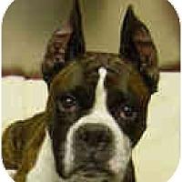 Adopt A Pet :: Cobe - North Haven, CT