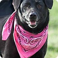 Adopt A Pet :: Mia - Scotland Neck, NC