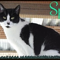 Adopt A Pet :: Spot - Ocean View, NJ