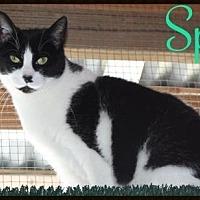 Adopt A Pet :: Spot - Ocean View, NJ
