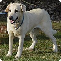 Adopt A Pet :: Herman - Cincinnati, OH