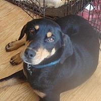 Adopt A Pet :: BoBo - Columbia, KY