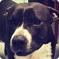 Adopt A Pet :: Lola - Charlotte, NC