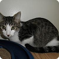 Adopt A Pet :: Crescendo - Milwaukee, WI