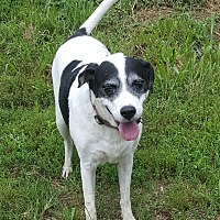 Adopt A Pet :: Missy - London, KY