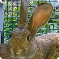 Adopt A Pet :: Peterson - Seattle c/o Kingston 98346/ Washington State, WA