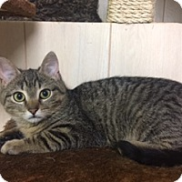 Adopt A Pet :: .Rudy - Ellicott City, MD