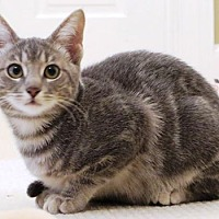 Adopt A Pet :: Scarlette  **COURTESY POST** - Columbus, OH