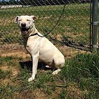 Adopt A Pet :: Snow - Raleigh, NC