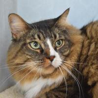 Adopt A Pet :: Finnigan - Greenfield, IN