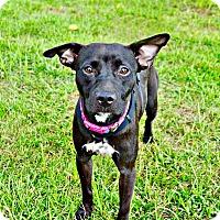 Adopt A Pet :: BABY--URGENT - Allen town, PA