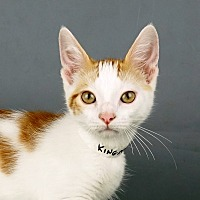 Adopt A Pet :: Kingston - Columbia, IL