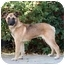 Photo 1 - German Shepherd Dog Mix Puppy for adoption in West Los Angeles, California - Jessica
