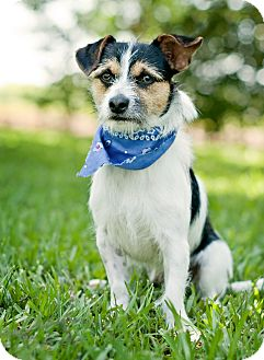 Terrier (Unknown Type, Small) Mix Dog for adoption in Portsmouth, Rhode Island - Farley