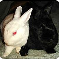 Adopt A Pet :: Q-Tip - Santee, CA