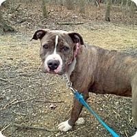 Adopt A Pet :: Paula - Tinton Falls, NJ