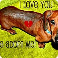 Adopt A Pet :: RJ - Humble, TX