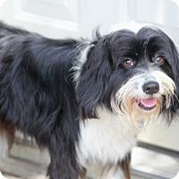 Adopt A Pet :: Gigi - Norwalk, CT