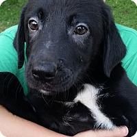 Adopt A Pet :: Frolics - Gainesville, FL