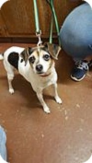 Terrier (Unknown Type, Small) Mix Dog for adoption in Salem, Ohio - Zoe