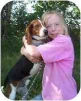 Beagle/Basset Hound Mix Dog for adoption in Carrollton, Texas - Murphy