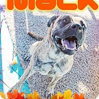 Adopt A Pet :: Mack - Odessa, TX