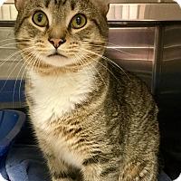 Adopt A Pet :: Galileo - Webster, MA