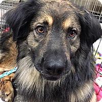 Adopt A Pet :: Jeff - Mount Airy, NC