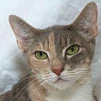 Adopt A Pet :: Grace M - Sacramento, CA