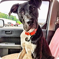 Adopt A Pet :: Skipper - New York, NY