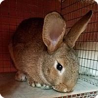 Adopt A Pet :: Trix - Lancaster, PA