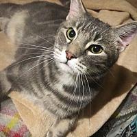 Adopt A Pet :: Zeke - Ridgecrest, CA