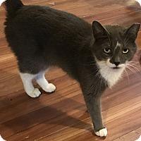 Adopt A Pet :: Mary Lou - Harrison, NY