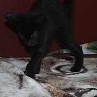 Adopt A Pet :: Ron (& George) - Herndon, VA
