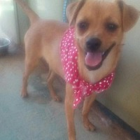 Adopt A Pet :: Ducky- last of her litter! - Apple Valley, CA