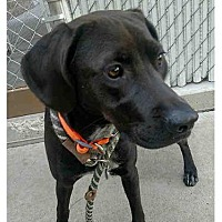 Adopt A Pet :: LEXI - Salt Lake City, UT