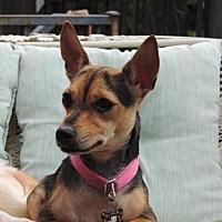 Adopt A Pet :: CHLOE - Norfolk, VA